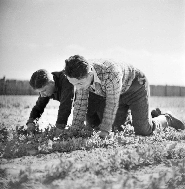 Junge Flüchtlinge bei der Feldarbeit im Werkdorp Nieuwesluis, 1936 Ab 1934 werden imWerkdorpHunderte jüdische Flüchtlinge in den Bereichen Landwirtschaft, Handwerk oder Hauswirtschaft ausgebildet. Sie sollen damit auf ein Leben in Palästina oder anderen Ländern vorbereitet werden. Die Regierung hat dazu Teile des Wieringermeerpolders kostenlos zur Verfügung gestellt. Bedingung für eine Aufnahme ist jedoch, dass die Flüchtlinge nach der Ausbildung schnellstmöglich weiterwandern. Foto Willem van der Poll / Nationaal Archief, Den Haag, Fotosammlung Van der Poll, CC0